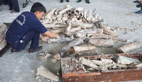 Lien tuc phat hien nga voi nhap lau trong go tu Chau Phi - Anh 1