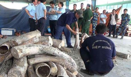 Lien tuc phat hien nga voi nhap lau trong go tu Chau Phi - Anh 5