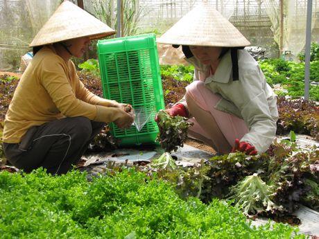 Rau Da Lat hut hang, gia tang dot bien - Anh 2