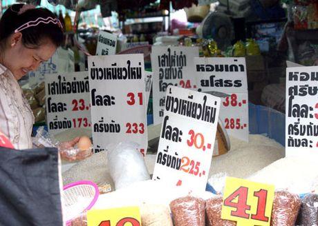 Campuchia no luc xuat khau gao - Anh 1