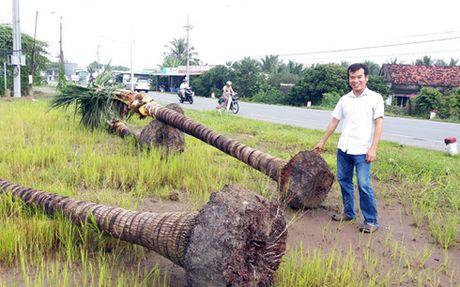 Chuyen la o Tien Giang: Thuong lai mua dua bung nguyen ca goc - Anh 1