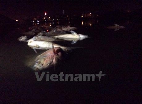 Ca lon chet bat thuong, noi trang ven bo ho Nam Linh Dam - Anh 7
