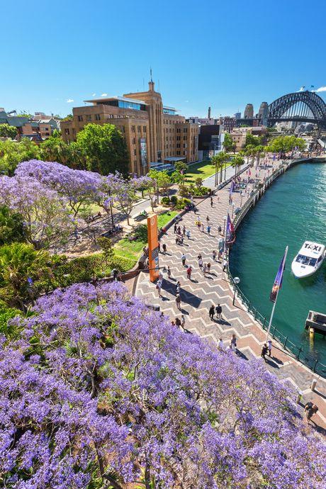 Ngam nhin Australia ruc ro khi mua hoa jacaranda no ro - Anh 6
