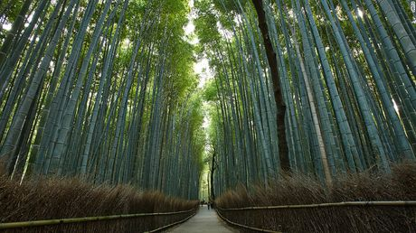 Nhung kham pha tuyet voi ve co do Kyoto cua Nhat Ban - Anh 3