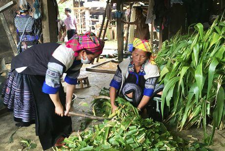 Chinh sach tin dung thiet thuc cho phu nu ngheo - Anh 1