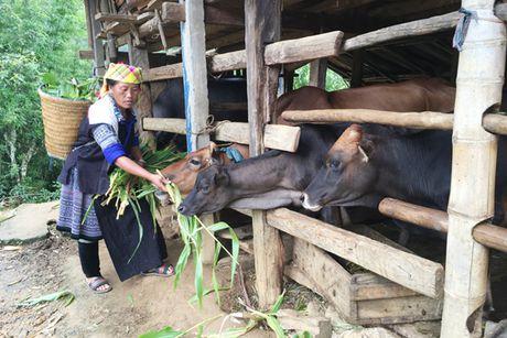 Chinh sach tin dung thiet thuc cho phu nu ngheo - Anh 2