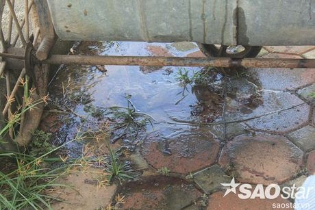 Gan 2 ta ca chet o ho Linh Dam, nguoi dan van hon nhien rua rau - Anh 3