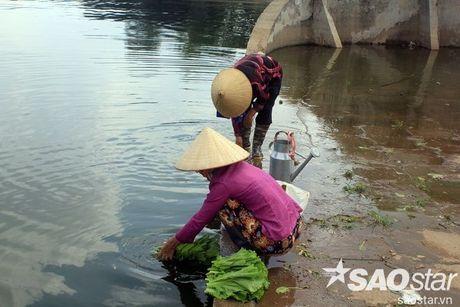Gan 2 ta ca chet o ho Linh Dam, nguoi dan van hon nhien rua rau - Anh 6