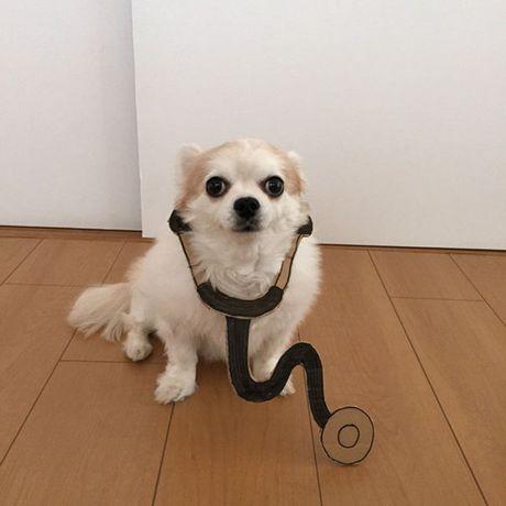 Phat sot voi man cosplay co 1-0-2 cua chu cho Chihuahua Mametaro - Anh 1