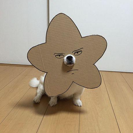 Phat sot voi man cosplay co 1-0-2 cua chu cho Chihuahua Mametaro - Anh 2