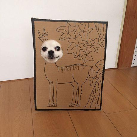 Phat sot voi man cosplay co 1-0-2 cua chu cho Chihuahua Mametaro - Anh 3