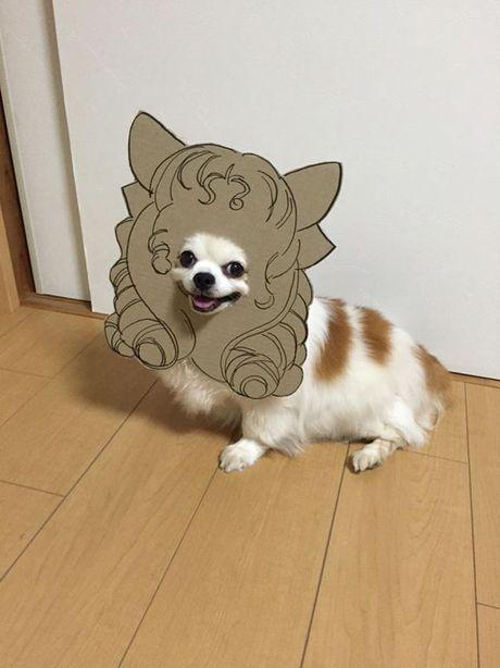 Phat sot voi man cosplay co 1-0-2 cua chu cho Chihuahua Mametaro - Anh 7