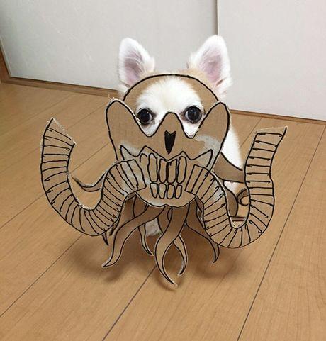 Phat sot voi man cosplay co 1-0-2 cua chu cho Chihuahua Mametaro - Anh 8