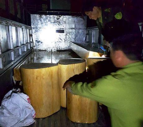 CSGT bat giu so luong lon go lau duoc van chuyen trai phep - Anh 1