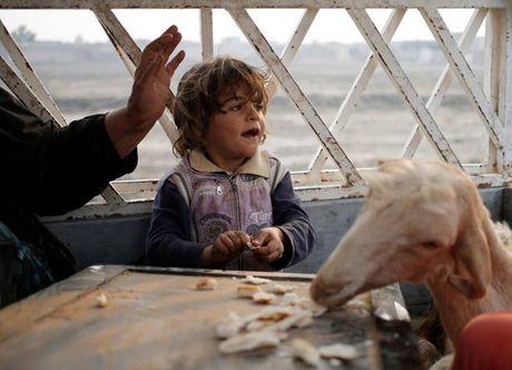Am anh nhung anh mat tre ti nan Iraq chay tron bao luc o Mosul - Anh 12