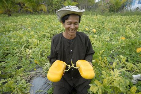 Nhung trang trai hoa qua 'hai ra tien' cua lao nong Viet - Anh 14