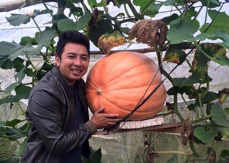 Halloween 2016: Tranh nhau mua bi ngo khong lo gia 5 trieu dong/qua - Anh 1