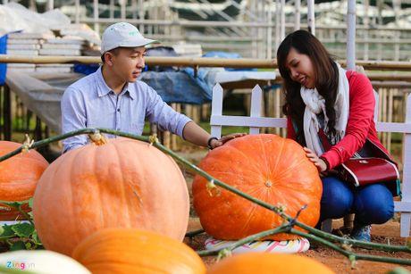 Halloween 2016: Tranh nhau mua bi ngo khong lo gia 5 trieu dong/qua - Anh 2