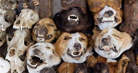 Halloween cung kham pha 12 dia diem kinh di chi can nhin da so hai - Anh 8