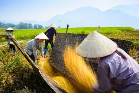 Dep me hon mua lua chin muon o Tuyen Quang - Anh 5