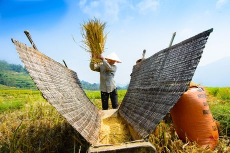 Dep me hon mua lua chin muon o Tuyen Quang - Anh 6