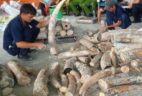 TIN NONG ngay 31/10: Bat hai doi tuong van chuyen 5.600 vien hong phien tu Lao ve Viet Nam - Anh 2