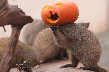Chum anh le hoi Halloween day ma mi tren khap the gioi - Anh 2