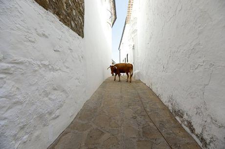 Say long truoc canh sac diem le lang trang Andalusia - Anh 5