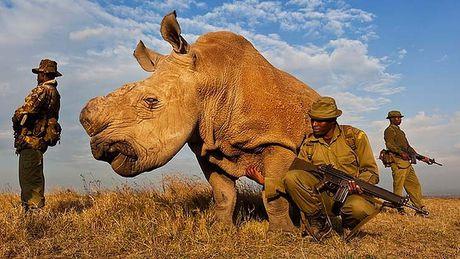 WWF: Trai dat dang doi dien voi cuoc dai tuyet chung - Anh 1