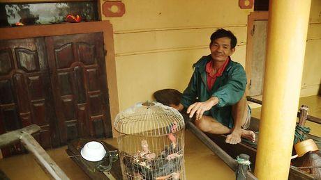 Hinh anh: Nguoi dan Quang Binh, Ha Tinh lai tat ta 'chay' lu - Anh 5