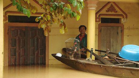 Hinh anh: Nguoi dan Quang Binh, Ha Tinh lai tat ta 'chay' lu - Anh 6