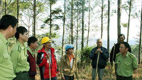 149.100 ha dat rung bi tranh chap, lan chiem - Anh 1