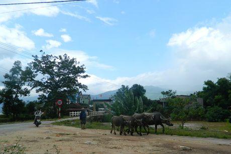 3 thuy dien o Quang Nam xa lu, dan cuong cuong lua trau bo len nui - Anh 4