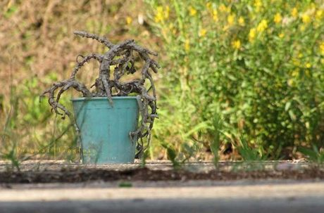 Thi tran Pripyat 30 nam sau tham hoa hat nhan Chernobyl - Anh 1