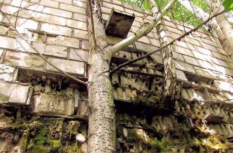Thi tran Pripyat 30 nam sau tham hoa hat nhan Chernobyl - Anh 7