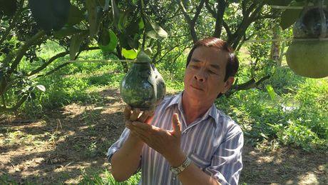 Buoi ho lo Tet Dinh Dau co san pham moi - Anh 1