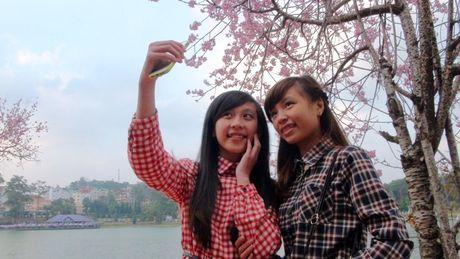 Cong bo chuong trinh ton vinh hoa mai anh dao Da Lat - Anh 5