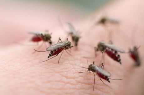 TP Ho Chi Minh: Ghi nhan them 3 ca nhiem vi rut Zika - Anh 2