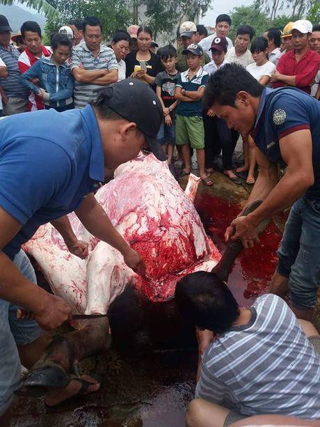 Quang Nam: Ro ri dien, giat chet hai ong trau mong, den 62 trieu dong - Anh 2