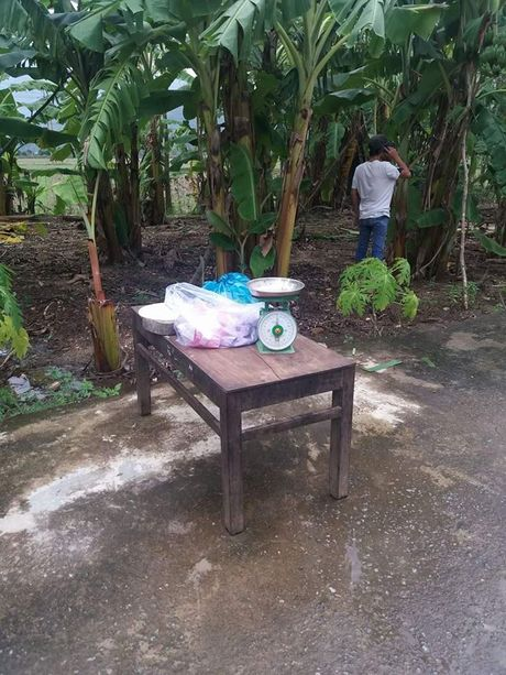 Quang Nam: Ro ri dien, giat chet hai ong trau mong, den 62 trieu dong - Anh 3
