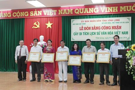 Cay tuoi tho 416 nam duoc cong nhan di tich lich su van hoa Viet Nam - Anh 1