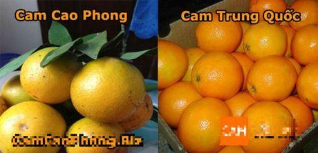Cam Trung Quoc 'dot lot' cam Cao Phong: Meo nho giup ban chon cam ngon chinh hieu - Anh 2