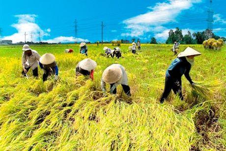Ong Nguyen Thien Nhan: Ta trong lua nang suat cao nhat the gioi ma van ngheo - Anh 1