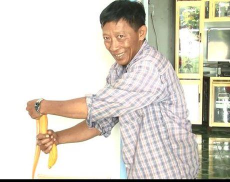 Nong dan mien Tay bat duoc luon vang nang gan 1kg - Anh 2
