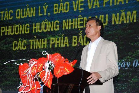 Tong ket cong tac phat trien, bao ve rung cac tinh phia Bac - Anh 1