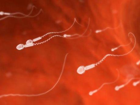 Virus Zika o Viet Nam: Khong the khong quan tam! - Anh 3