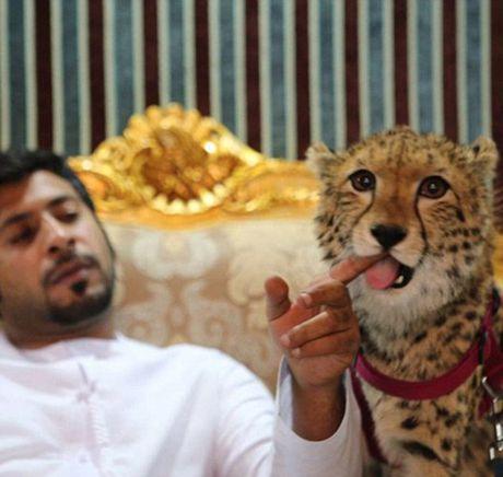 Nhung thu choi khac nguoi cua dai gia Dubai - Anh 8
