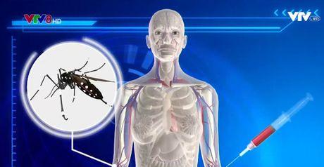 TP.HCM dap dich Zika tai 3 diem nong - Anh 1