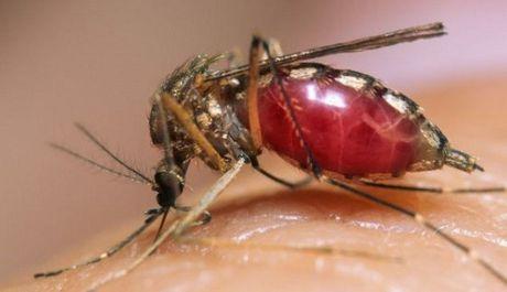 11 quan nao o TP.HCM co nguoi nhiem virus Zika? - Anh 1