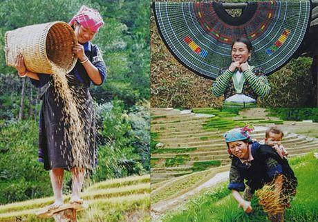 Tieng goi phia chan may - Anh 4